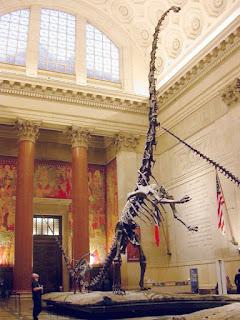 Esqueleto Barosaurus