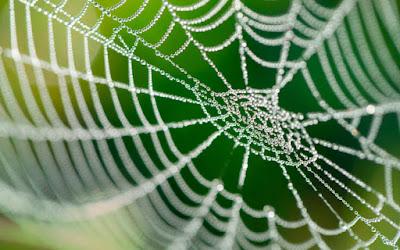 o-terastios-istos-arachnis-poy-tha-mporoyse-na-pagideysei-kai-anthropo