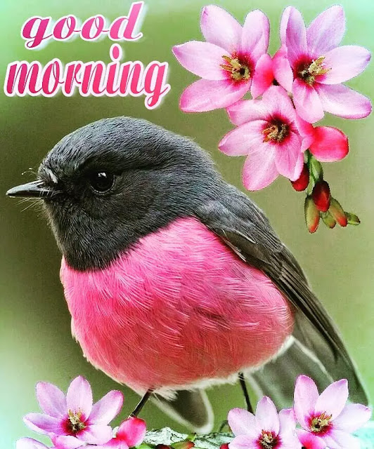 images of beautiful good morning