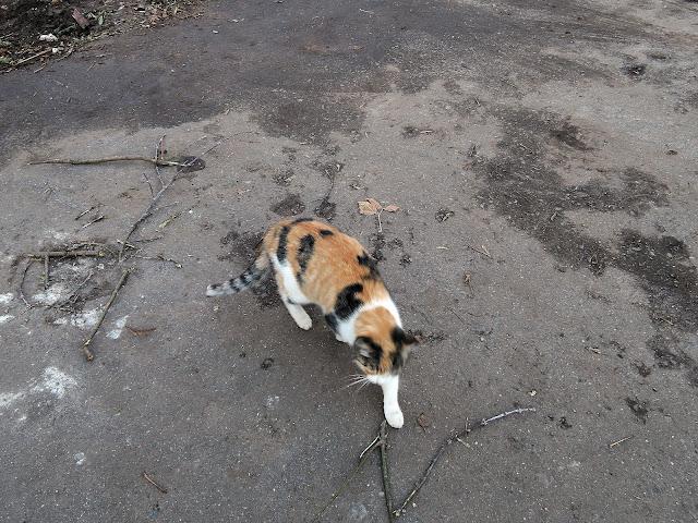 гольяновская кошка