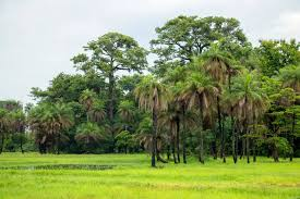 A LA DÉCOUVERTE DE LA NATURE CASAMANCAISE :  Tourisme, hôtel, plage, culture, vacance, parcs, LEUKSENEGAL, Sénégal, Dakar, Afrique