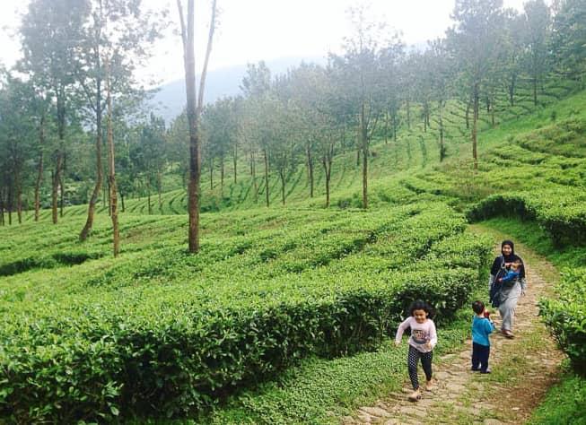 5 Destinasi Wisata Alam Puncak Yang Wajib Kamu Kunjungi