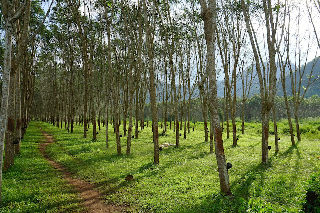 Top10 largest Agriculture Producing India Rubber
