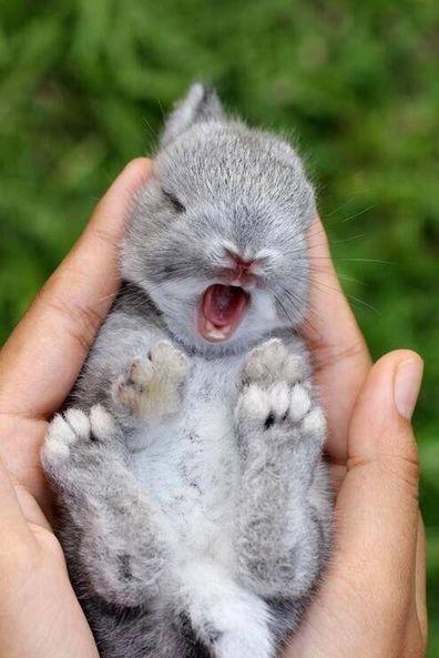 baby animal yawning