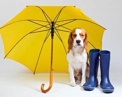 O que fazer com cão que tem medo de chuva
