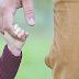 Devocional 22| Cooperação do homem na Ação Divina