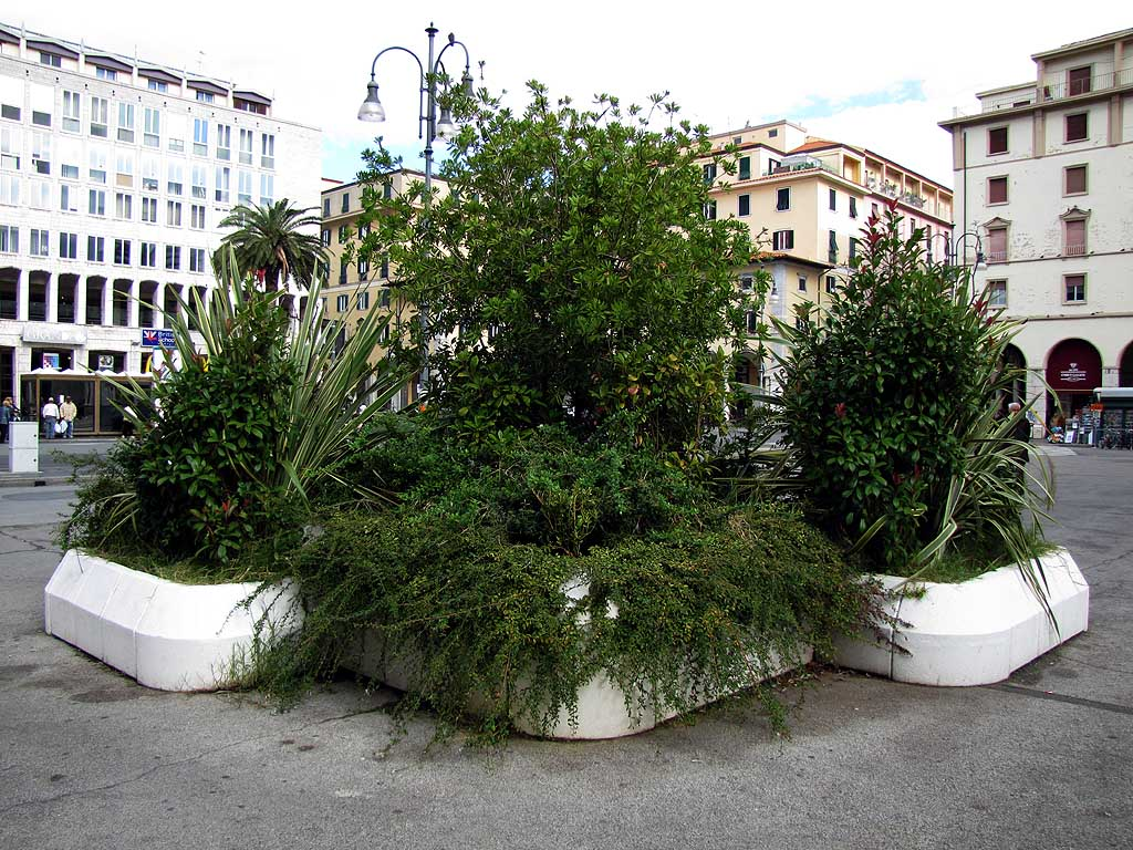 Planters out of control in piazza Grande, Livorno