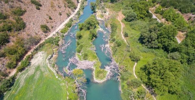 Επέλαση της νόσου των πλατάνων στην Ήπειρο