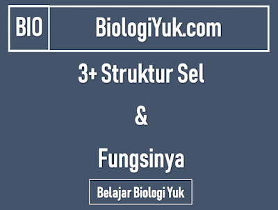 3 Struktur Sel dan Fungsinya
