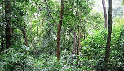 Shendurney Wildlife Sanctuary (ചെന്തുരുണി വന്യജീവി സങ്കേതം)
