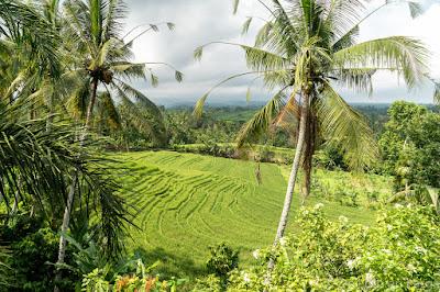 Rizieres-Pupuan-Bali
