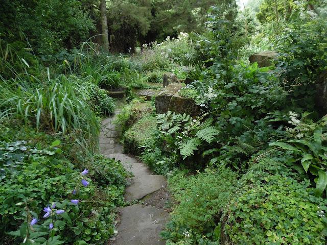 cienisty ogród leśny