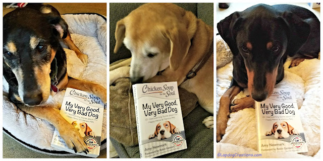 chicken soup for the soul dog book rescue dogs