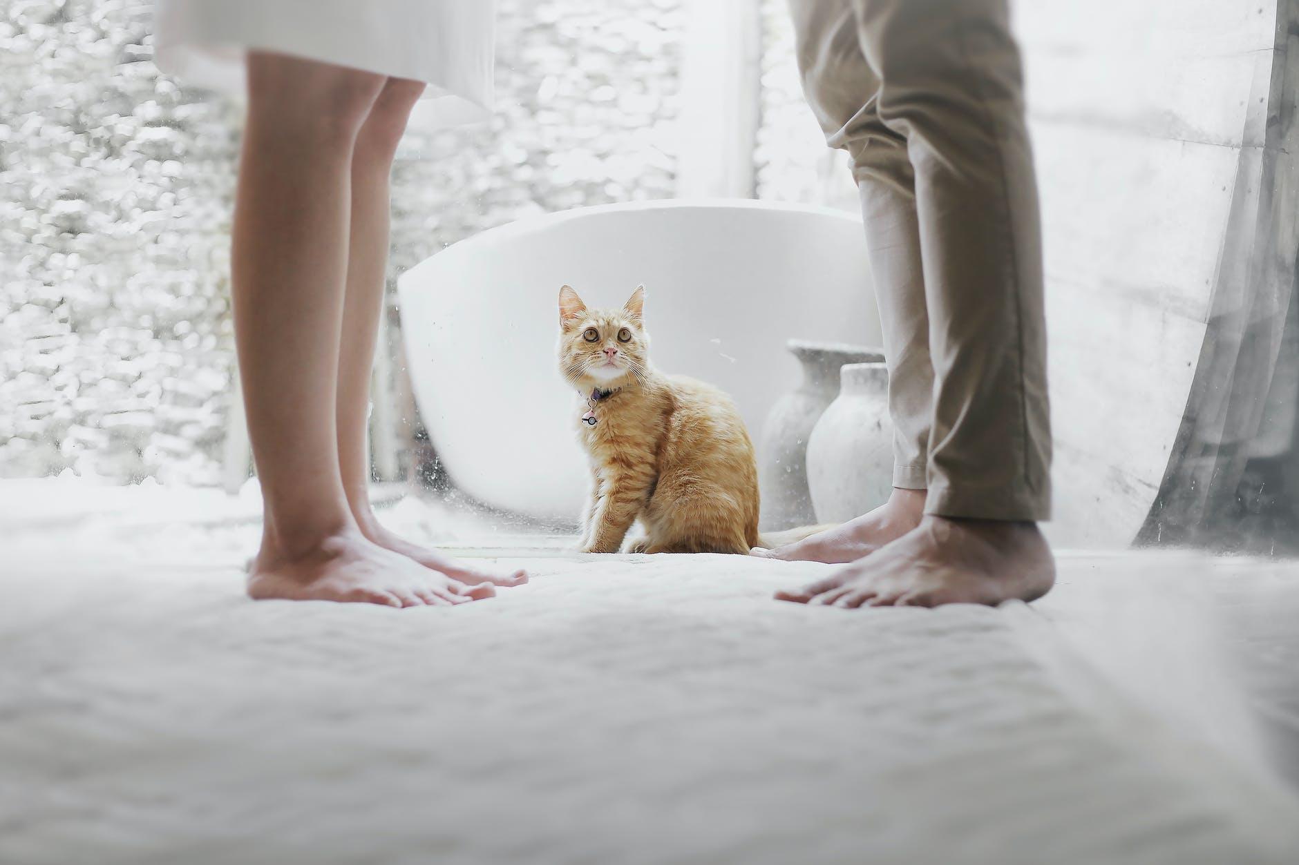 Comment et quand est-il préférable de vermifuger les chats