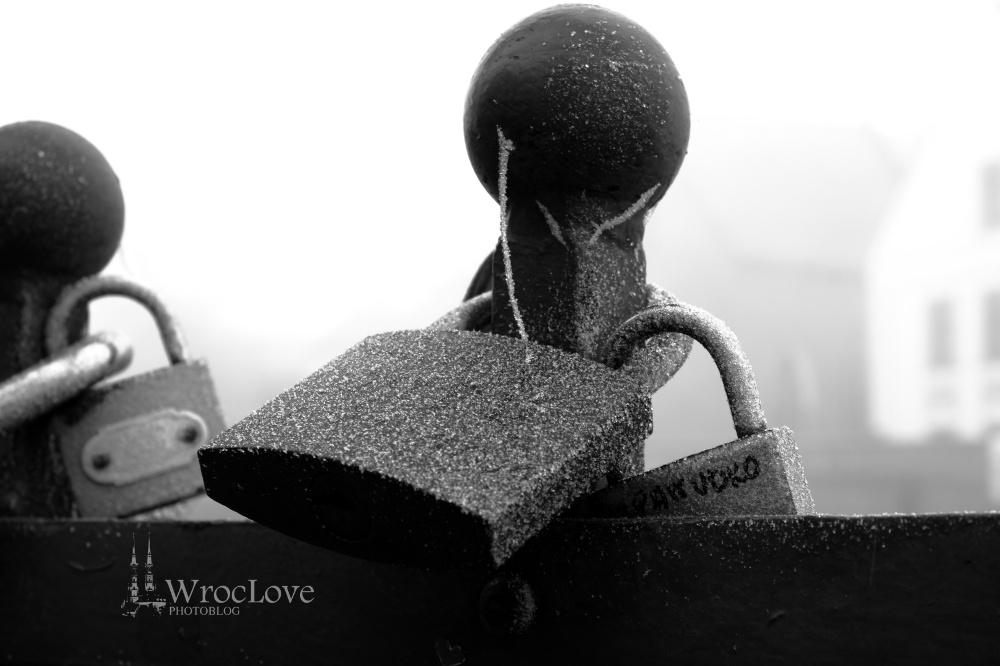 WrocLve PhotoBLOG
