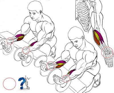 Ejercicios para el Engrosamiento de músculos y fortalecimiento de las muñecas