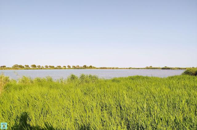 Bassa de les Olles en el Delta de l'Ebre