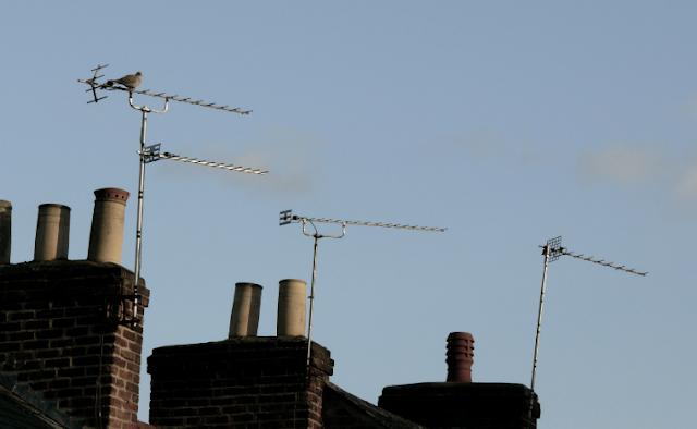 TV aerials on rooftops
