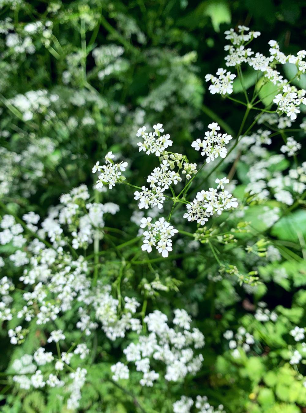 Wildflowers on the Bath Skyline Walk - Emma Louise Layla, UK travel & lifestyle blog