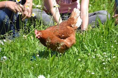 Daerah Produsen Telur Terbesar di Indonesia : Kediri dan Blitar
