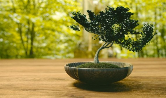 Importance of Tree in Astrology