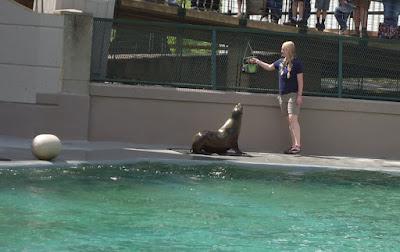 Kansas City Zoo Sea Lion Show