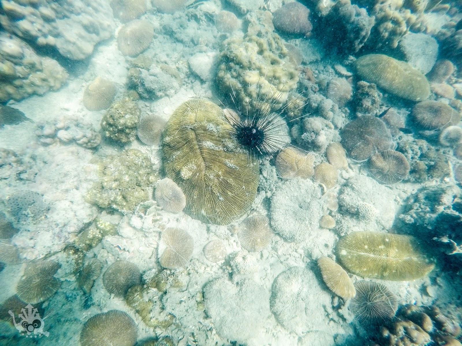 relationship between zooxanthellae coral polyps on rocks