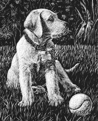 Yellow Lab Puppy Artwork Drawing On Black Scratch Paper