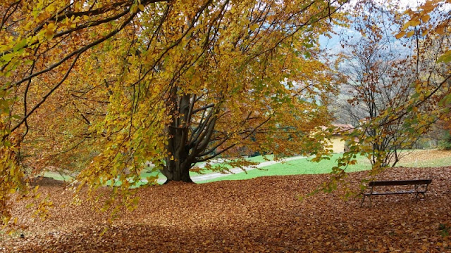 Parco Burcina IN AUTUNNO