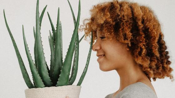 Manfaat Lidah Buaya (Aloe Vera) Untuk Kulit Wajah Usia 30 Tahunan