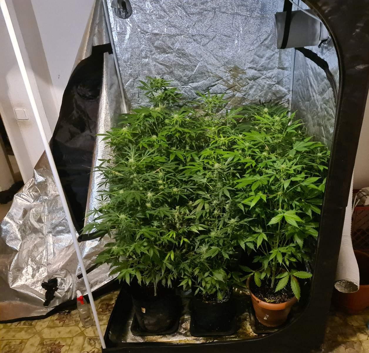 Συλλήψεις σε Καβάλα και Θάσο για ναρκωτικά