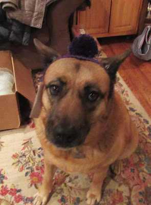 Roxy is not happy to be modeling her new hat.