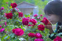 Guinness World Records Kukuhkan Li Ziqi Sebagai Youtuber Mandarin dengan Subscriber Terbanyak