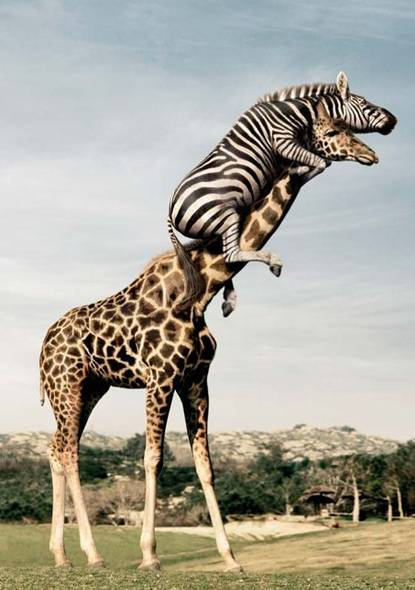 [Image: 1-1-Funny-animals1.jpg]