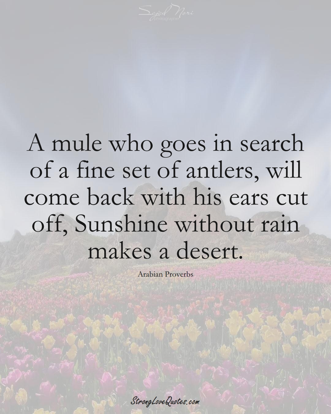 A mule who goes in search of a fine set of antlers, will come back with his ears cut off, Sunshine without rain makes a desert. (Arabian Sayings);  #aVarietyofCulturesSayings