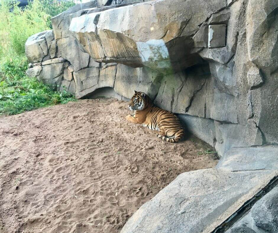 Reading, Listening, Watching 3 | Zoos are a great place to watch the animals live.