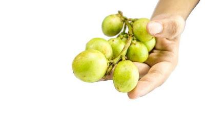 9 Manfaat dan Kandungan Vitamin dalam Buah Duku Bagi Kesehatan