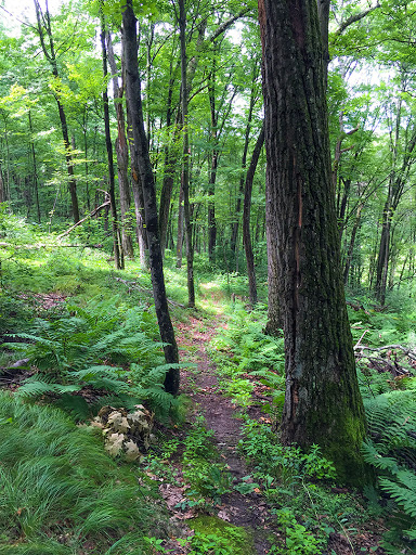 Ice Age Trail Greenwood Segment