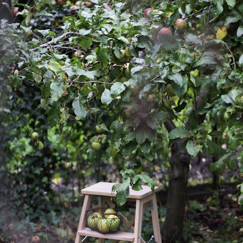 Sezon na jabłka. Trzy przepisy z wykorzystaniem jabłek w kuchni.