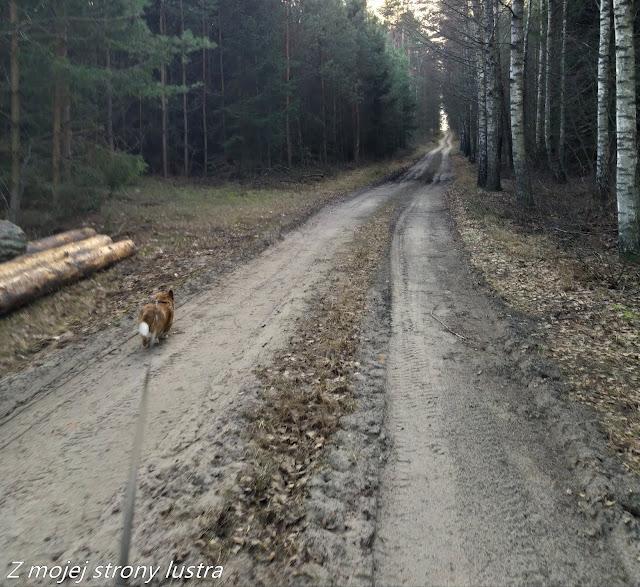 leśna ścieżka i pies