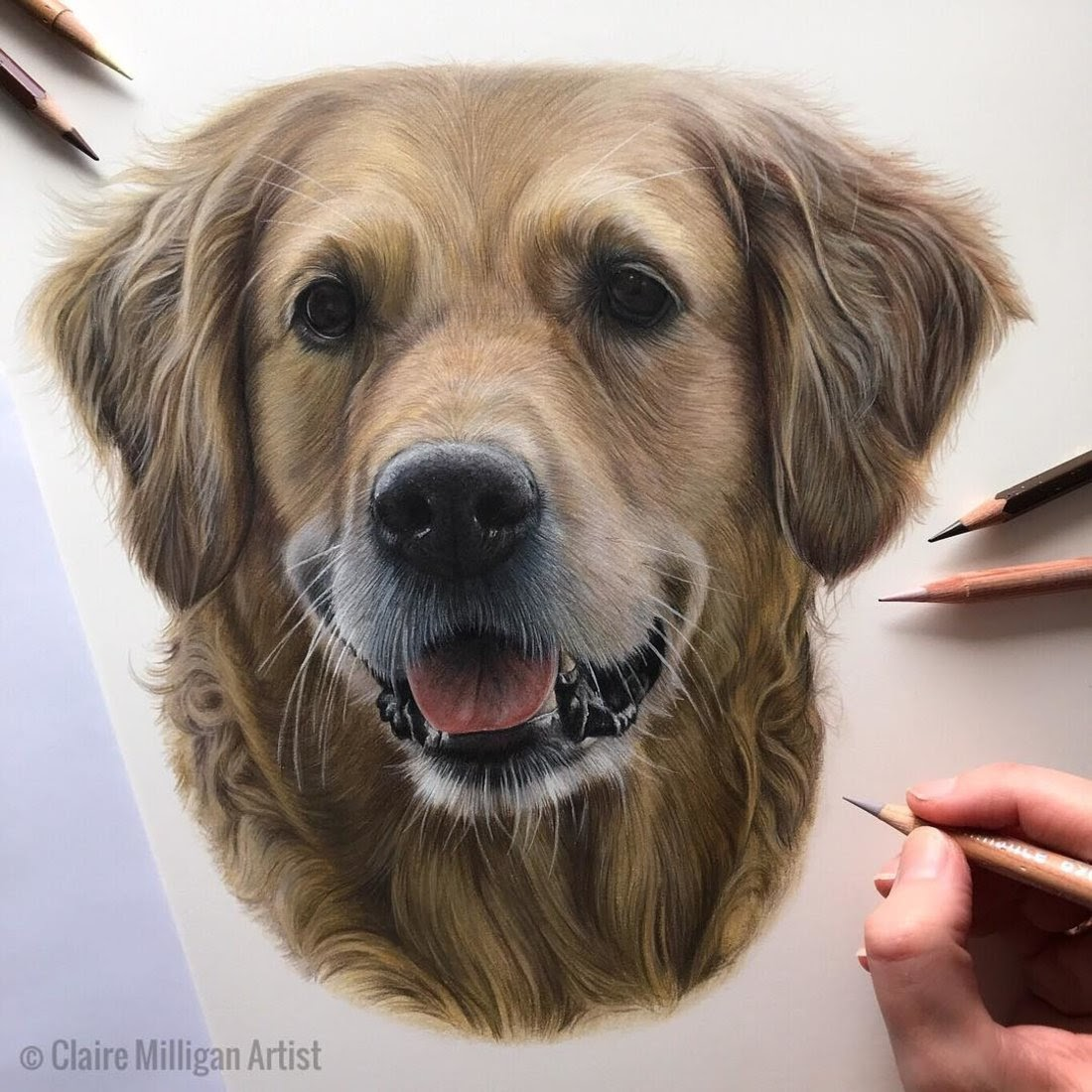 05-Golden-Retriever-Claire-Milligan-Pet-Portraits-and-Wildlife-Art-www-designstack-co