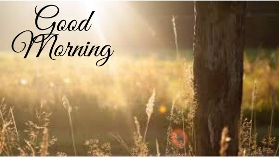 Download Best Good Morning Images In HD