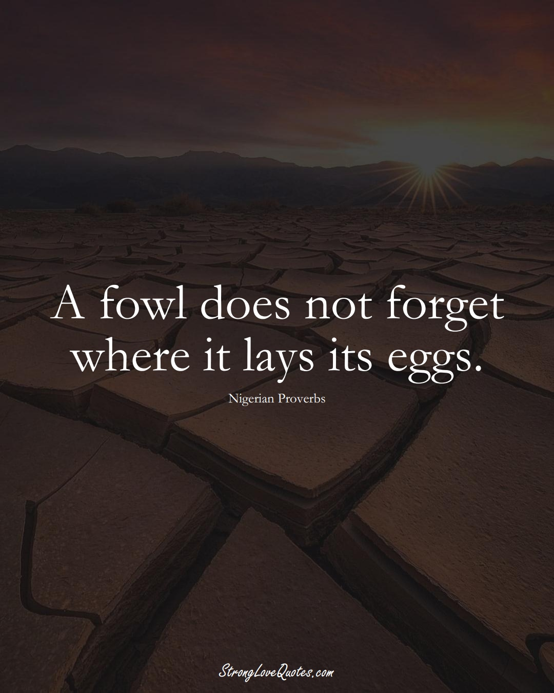 A fowl does not forget where it lays its eggs. (Nigerian Sayings);  #AfricanSayings
