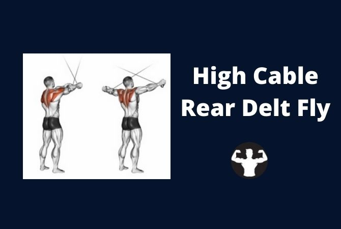 Cable Rear Delt Flyes