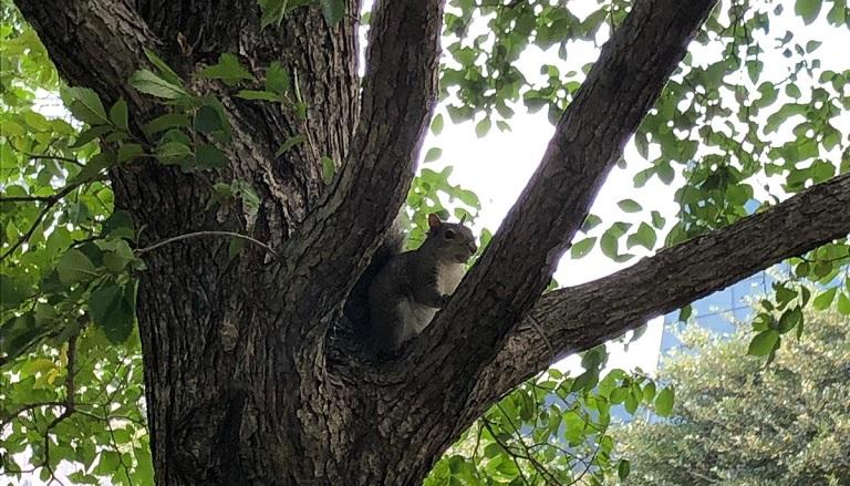 curiosidades-toronto