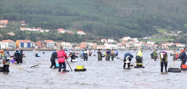 Vivir o Marisqueo en la Ría De Muros E Noia