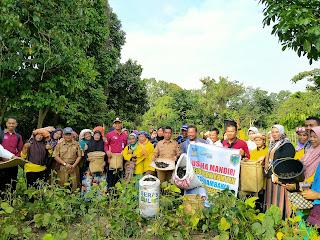 Dinas Sosial Kabupaten Batanghari Panen Raya Kacang Hijau di Desa Rambahan