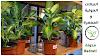 النباتات الحولية و النباتات المعمرة، ما الفرق؟!