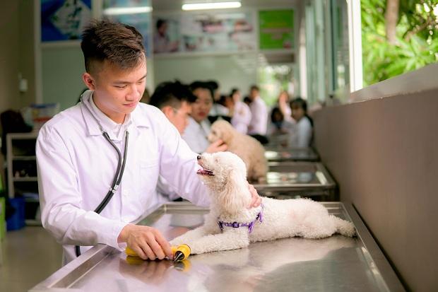 Sinh viên thực tập ngành Thú y