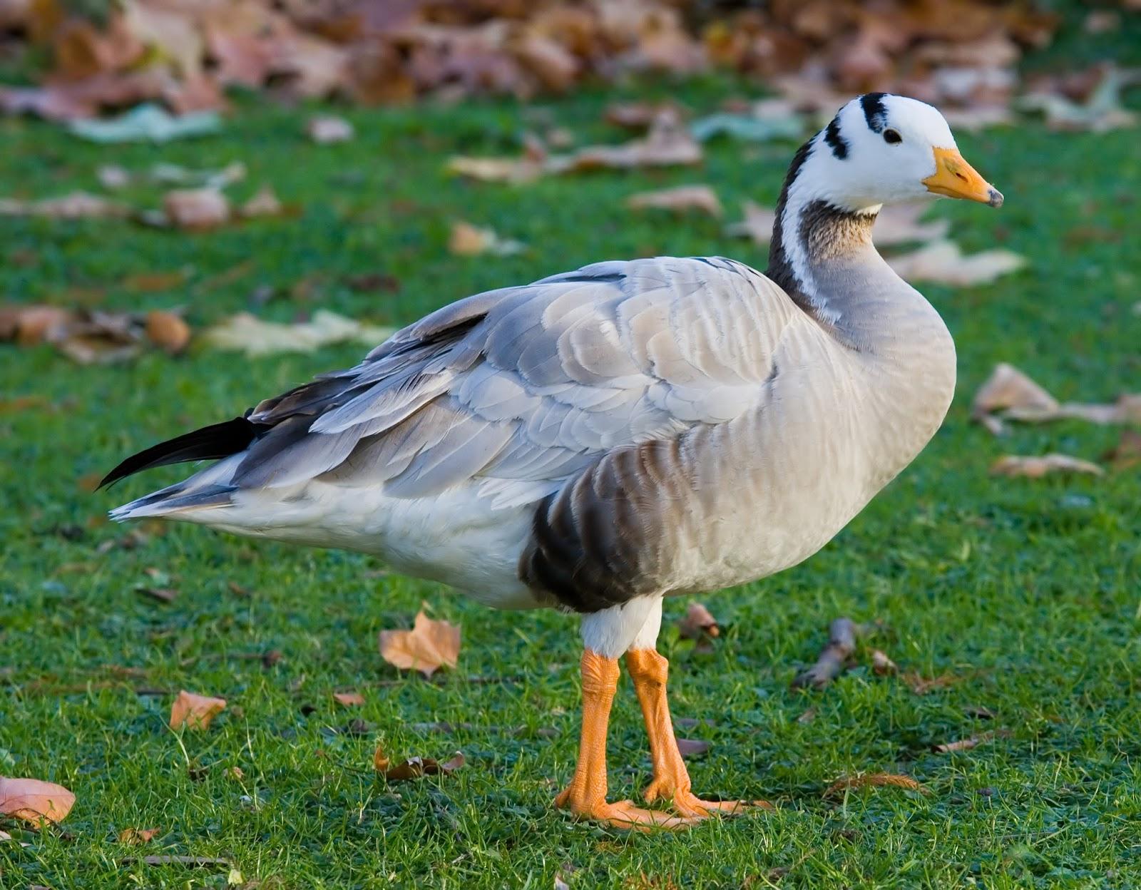 Tamilnadu Tourism: Melselvanur-Keelselvanur Bird Sanctuary